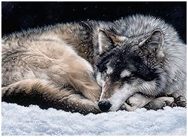 And the Wolf Dreams - click to view larger
