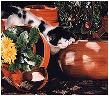 Potting Shed Play - click to view larger