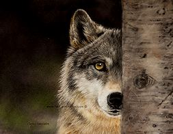 Always Watchful - click to view larger