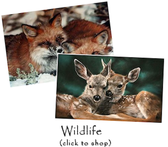 Wildlife Art Gifts - Click to Shop